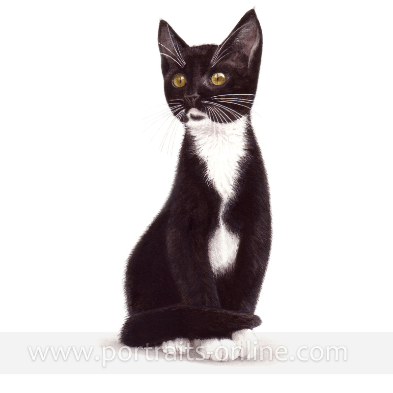 A watercolour portrait painting of a black & white cat