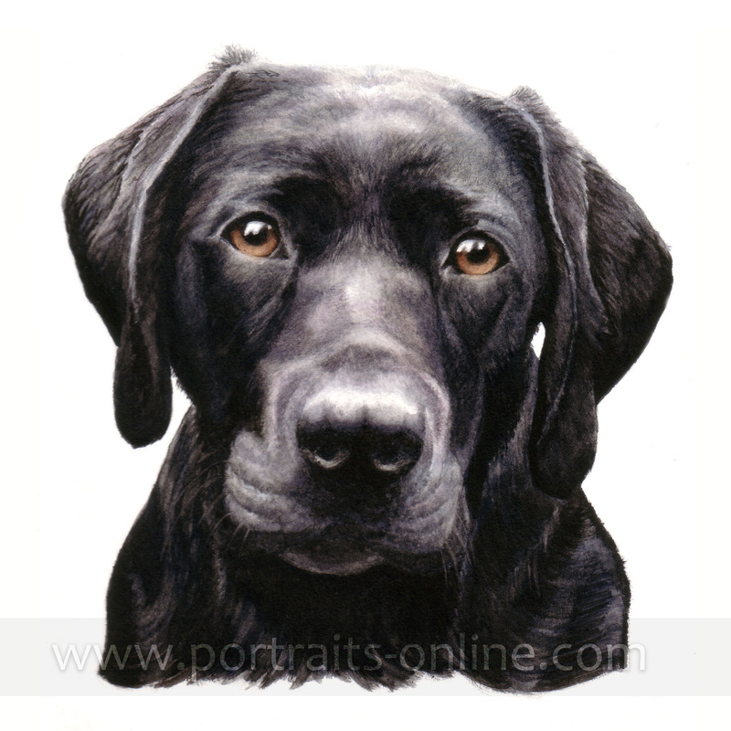 Watercolour portrait painting of a black Labrador dog