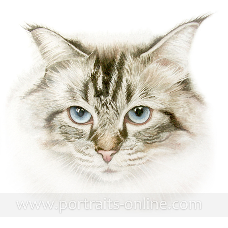 Watercolour cat portrait painting with large blue eyes